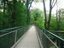 树梢吊桥 库存图片