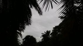 树梢和多云天空 免版税图库摄影