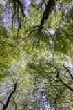 树梢机盖背景 图库摄影