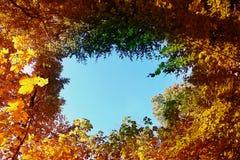 树梢秋天自然本底与蓝天的 免版税库存图片