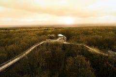 树梢道路, Hainich国家公园,德国 免版税库存照片