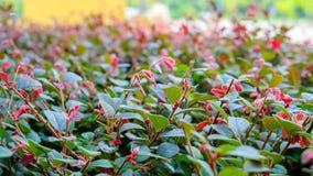 树梢年轻红颜色花 免版税库存图片