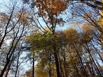 树梢 库存图片