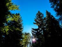 树梢 免版税库存图片