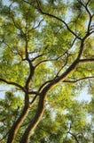 树梢 免版税库存照片