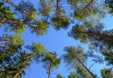 树梢 库存照片