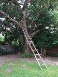 树梯子 免版税库存照片