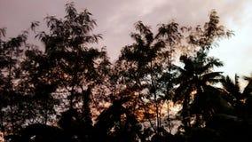 树棕榈树天空五颜六色后面 免版税图库摄影