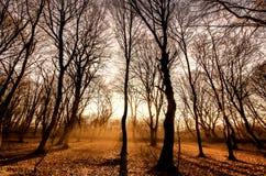 树森林日落 免版税库存照片
