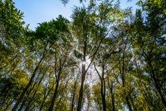 树森林 库存图片