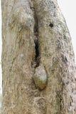 树森林 免版税库存图片