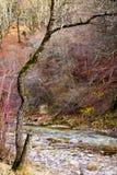 树森林 免版税图库摄影