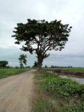 树植物木头树荫处 库存照片