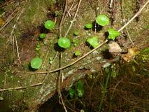 树植物群 免版税库存图片