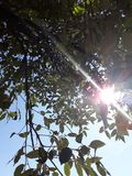 树植物 库存图片