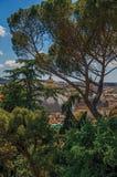 树概要,大教堂大厦圆顶和屋顶在一个晴天在罗马 库存照片
