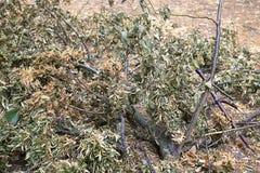 树残破的分支与叶子的在公园Rotehorn,马格德堡, burel 免版税库存图片