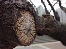 树每年年轮在城市 免版税库存图片