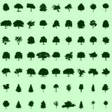 树汇集 库存照片