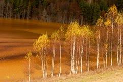 树污染了湖 库存照片