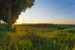 树沿着在日出的一条输电线 免版税库存图片