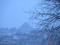 树清真寺和叶子  免版税库存图片
