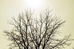 树烘干泰国的冬天 免版税库存图片