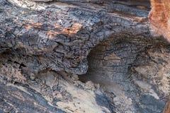 树烧伤纹理 免版税图库摄影