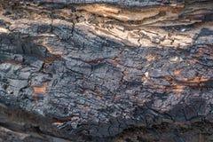 树烧伤纹理 库存图片