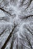 树照片在有透视的一个森林里查寻  库存图片