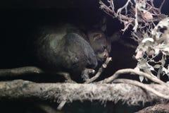 树熊猴 库存照片