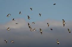 树燕子群  库存图片