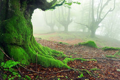 树特写镜头根源与在森林的青苔 库存图片
