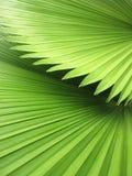 树特写镜头美丽的棕榈叶在阳光下 免版税库存图片