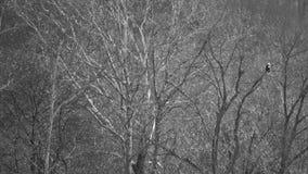 树状分支支持对被栖息的老鹰 免版税库存图片