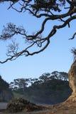 树狂放的海滩新西兰 免版税图库摄影