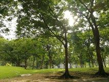 树环境在公园 库存照片