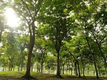 树环境在公园 免版税库存图片