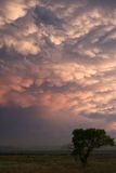 树现出轮廓反对mammatus云彩 图库摄影
