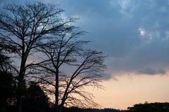 树现出轮廓和蓝色云彩 免版税库存图片