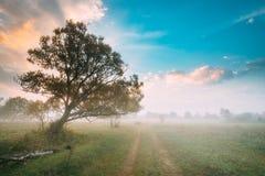 树生长近的乡下公路 早晨在有薄雾的草甸风景的日出天空 秋天 库存图片