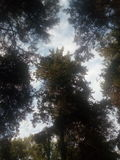 树生长 免版税库存照片