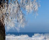 树用雪和树冰盖 免版税库存照片
