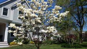 树白色蓝天俏丽的太阳 库存图片
