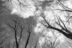 树的上面在白色背景的 库存图片