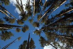 树的上面 库存照片
