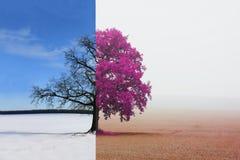 树的不同的边与改变的季节的从冬天到秋天 库存照片