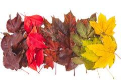 树的不同的颜色下落的叶子在行在 免版税图库摄影