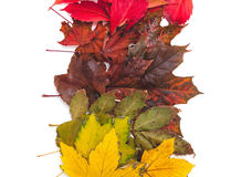 树的不同的颜色下落的叶子在行在 库存图片