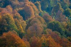 树的不同的颜色在秋天 免版税库存图片